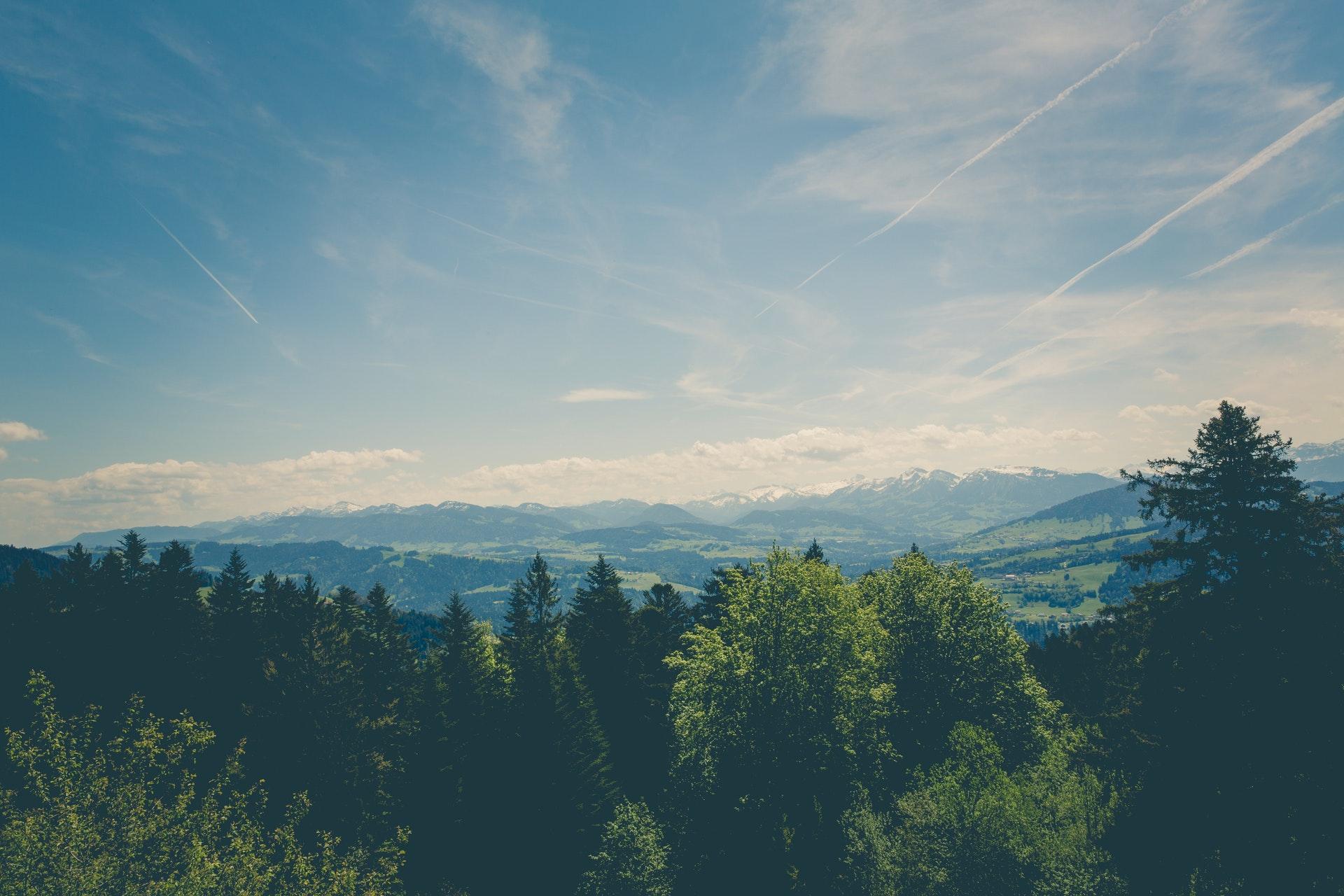 forest-hd-wallpaper-landscape-129105.jpg